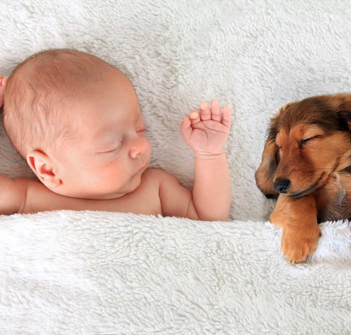 Bringing Home Baby To Your Dog's Home: Tips From An Expert